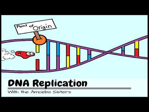 DNA Replication: The Cell's Extreme Team Sport